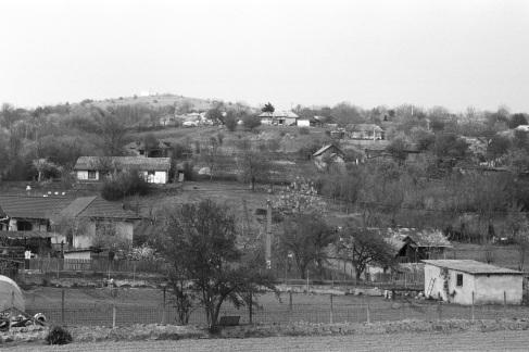 Telita (1)