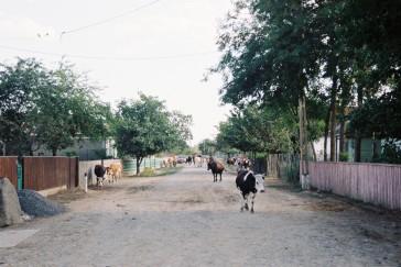 chilia-veche-16