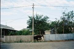 chilia-veche-31